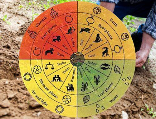 Forse non tutti conoscono la differenza tra l'agricoltura biodinamica e quella biologica… vediamole insieme